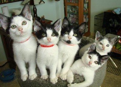20101111__cheapcats21.jpg