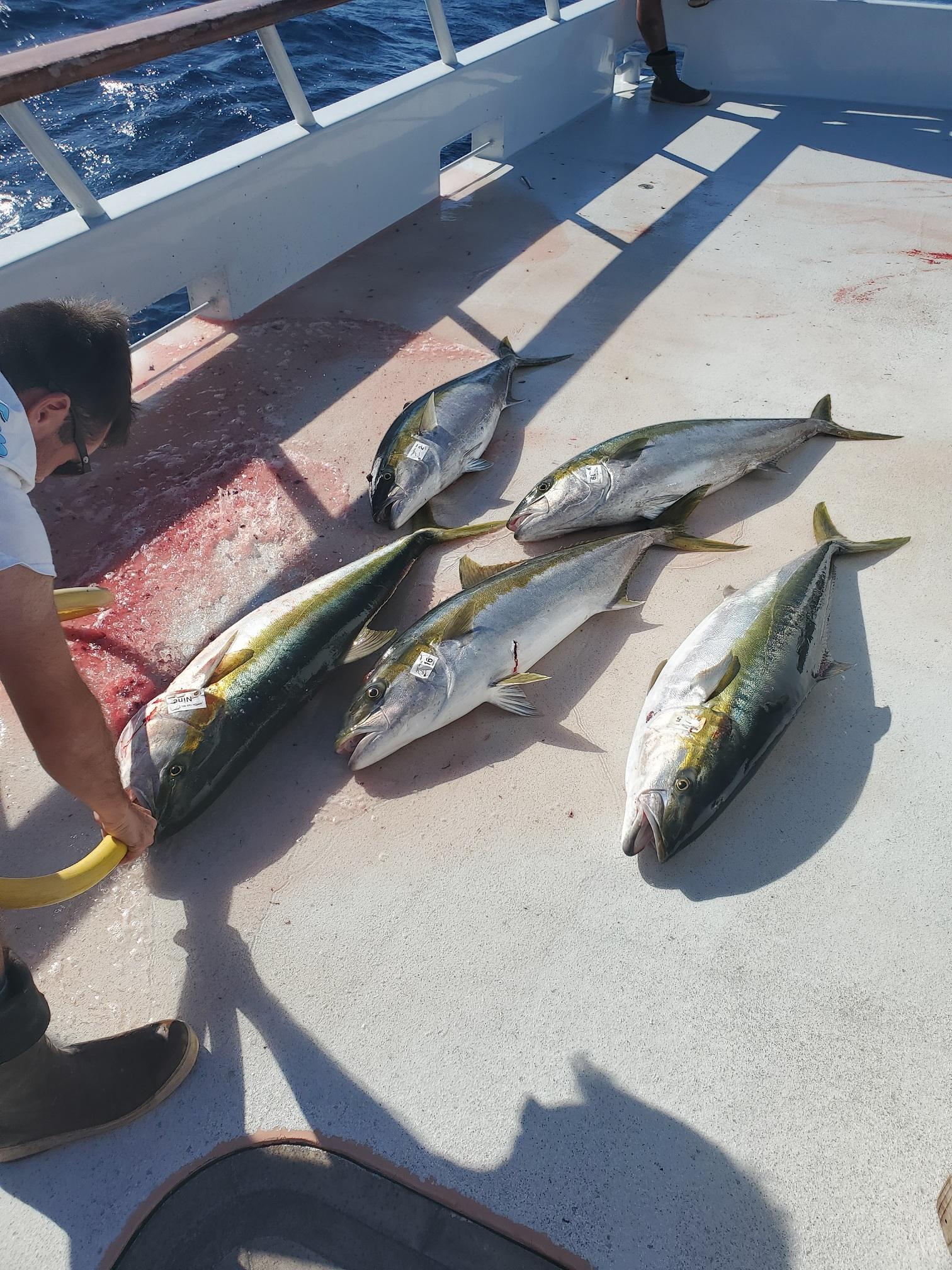 40-50 lb yellows from Morgan Bank.jpg