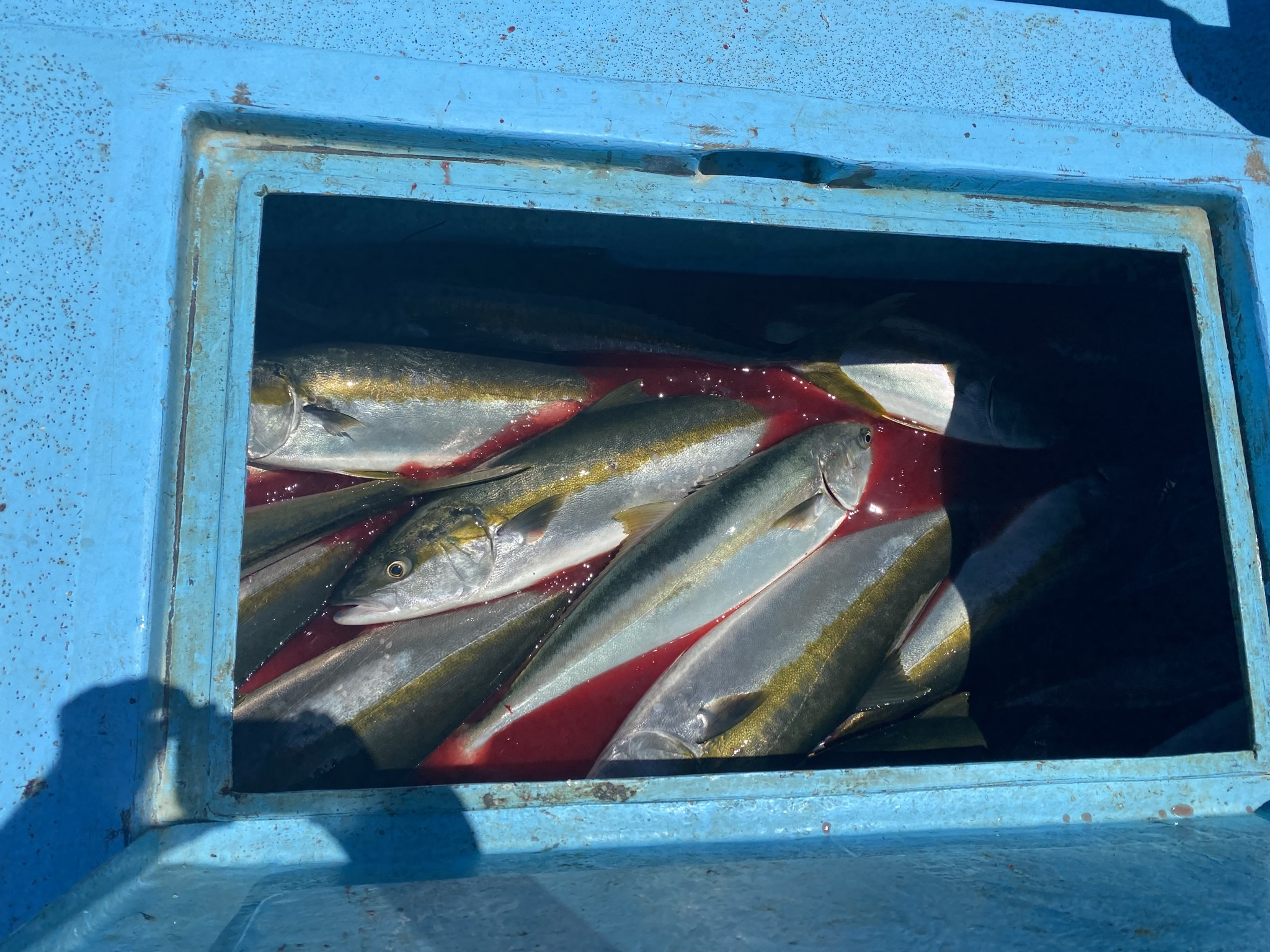 8 fishbox.JPEG