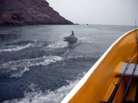 baron dolphin.jpg