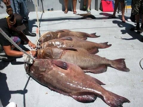 baron groupers.jpg