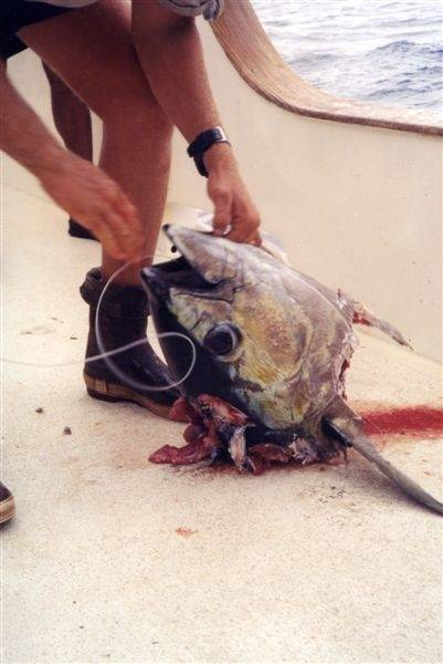 Best Trophy Fish Pics 015.jpg