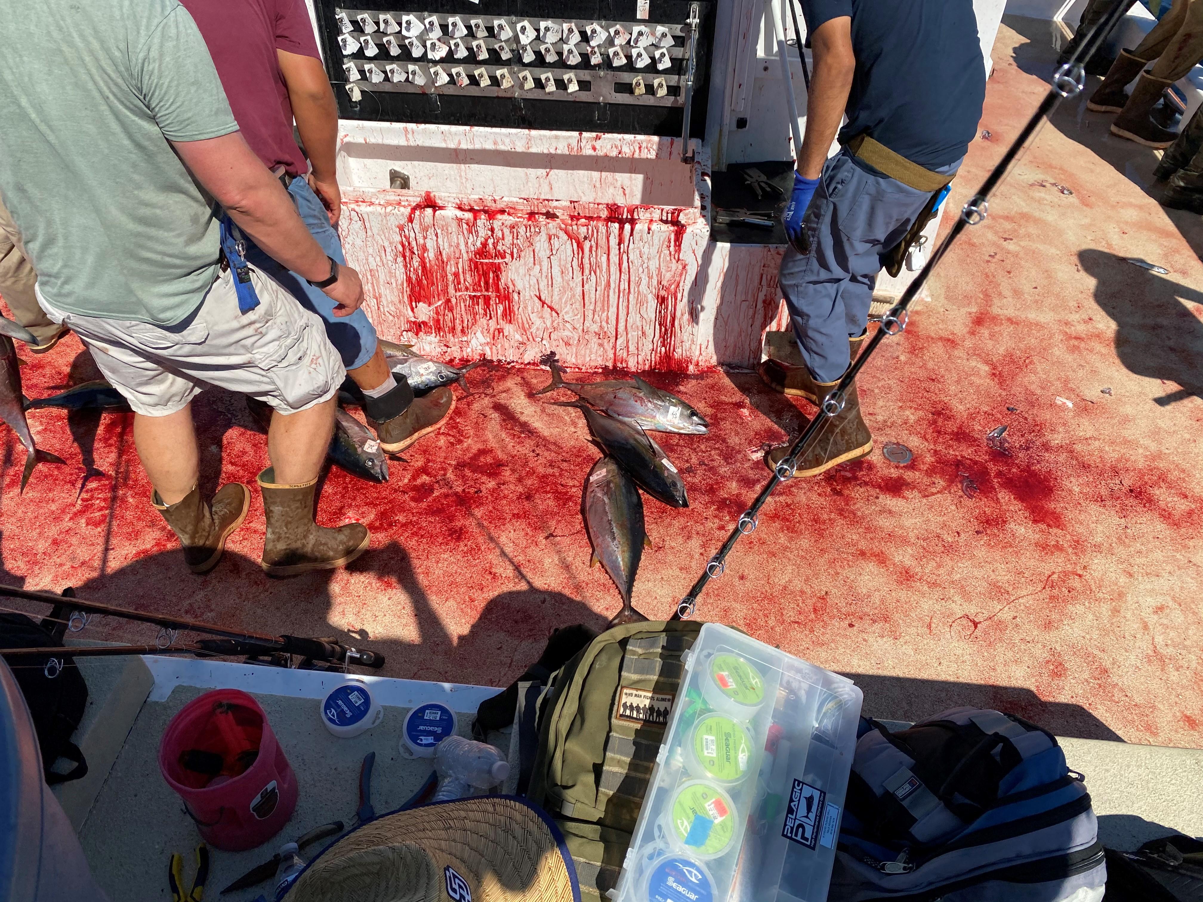 BLOODY DECKS.jpg