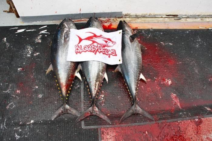 Bloodydecks-tuna-2.jpg