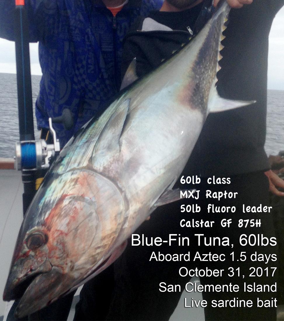 bluefin60.jpg