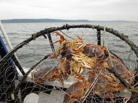 Crab in pot.JPG