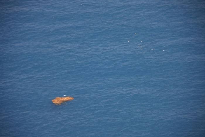 dorado-kelp-fishdope.jpg