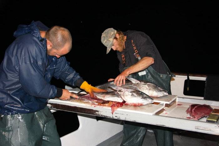 Fillet-tuna.jpg