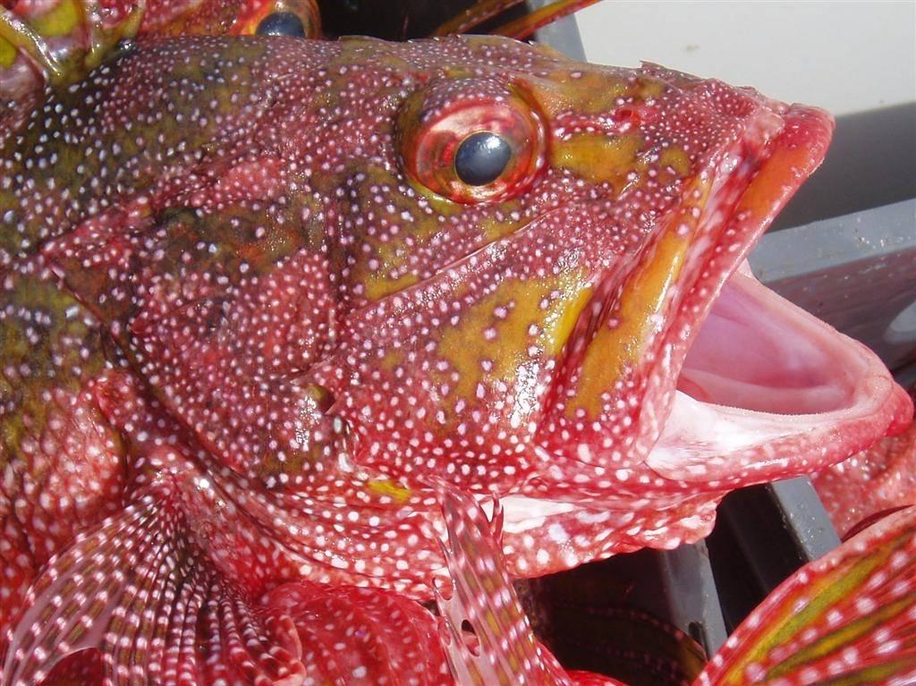 Fish head (Large).jpg
