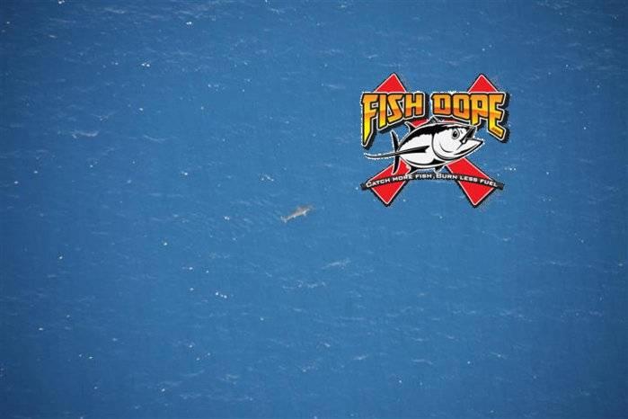 fishdope-hammerhead-shark-fishing.jpg