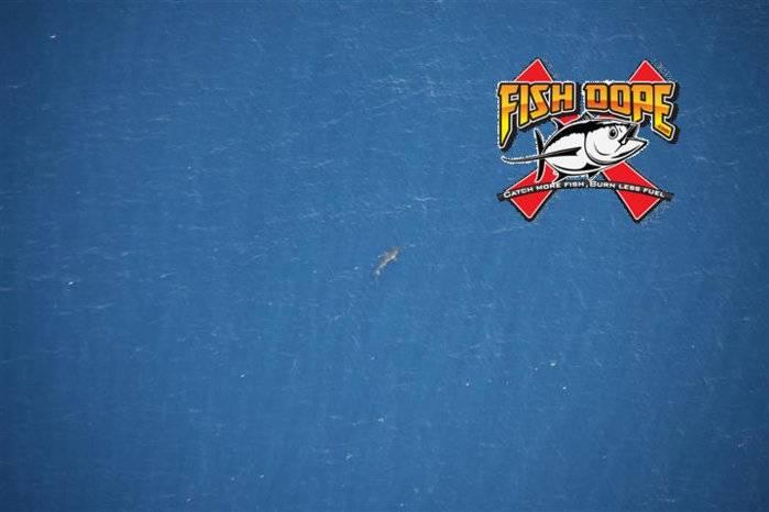 fishdope-hammerhead-shark.jpg