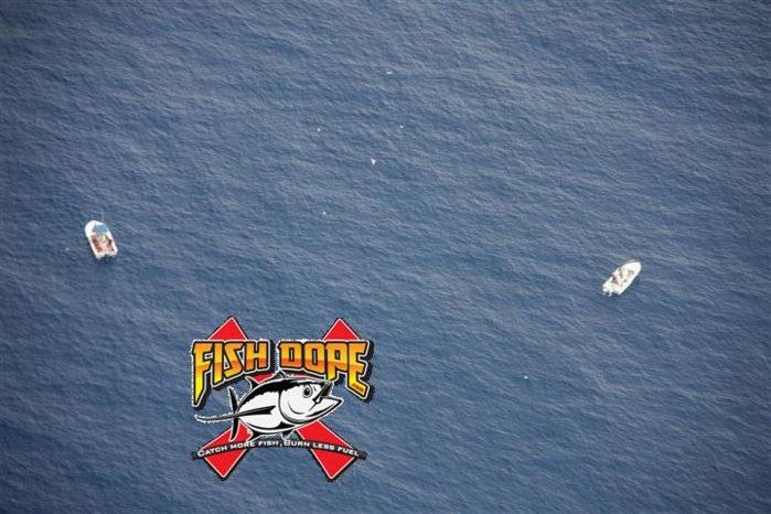 Fishdope Spotter Plane 10.jpg