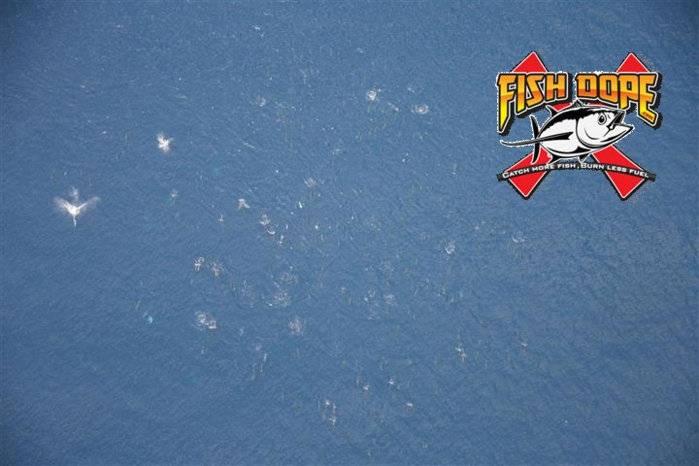 Fishdope-Spotter-Plane-1012.jpg