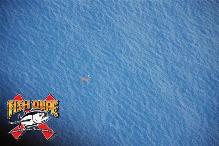 Fishdope-Spotter-Plane-1014.jpg