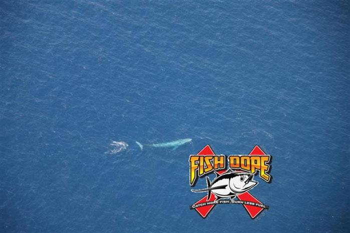 Fishdope-Spotter-Plane-102.jpg