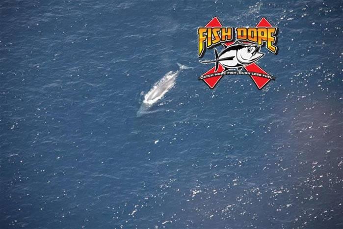 Fishdope-Spotter-Plane-103.jpg