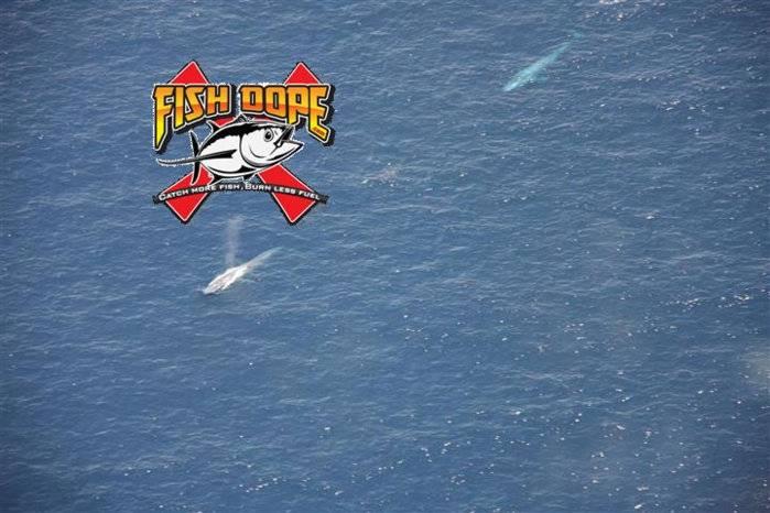 Fishdope-Spotter-Plane-104.jpg