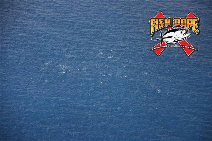 Fishdope-Spotter-Plane-106.jpg