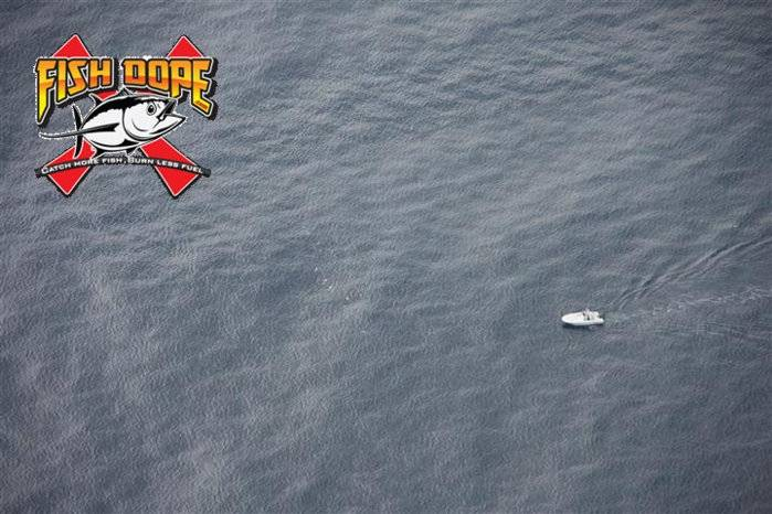 Fishdope Spotter Plane 2.jpg