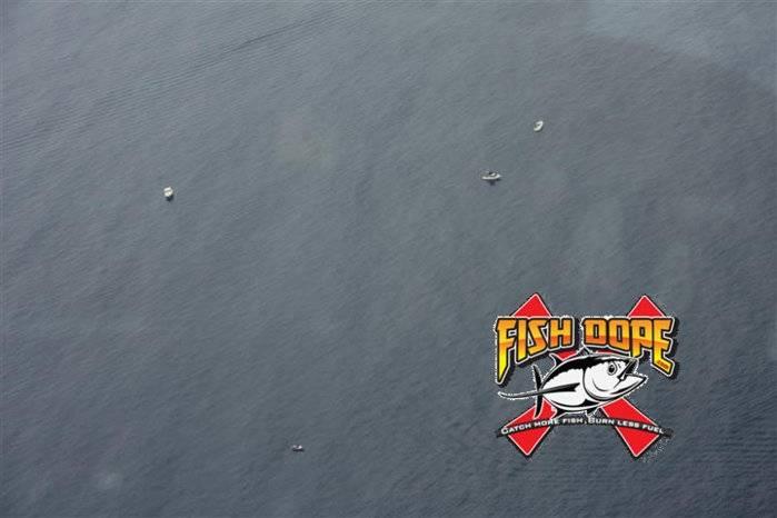 Fishdope Spotter Plane 4.jpg