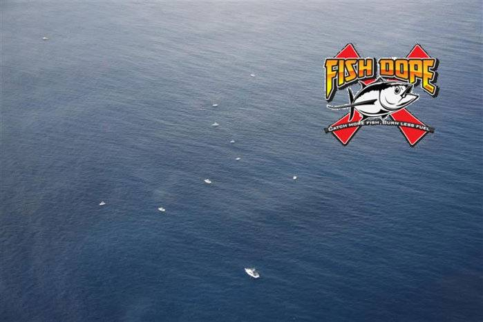 Fishdope Spotter Plane 8.jpg