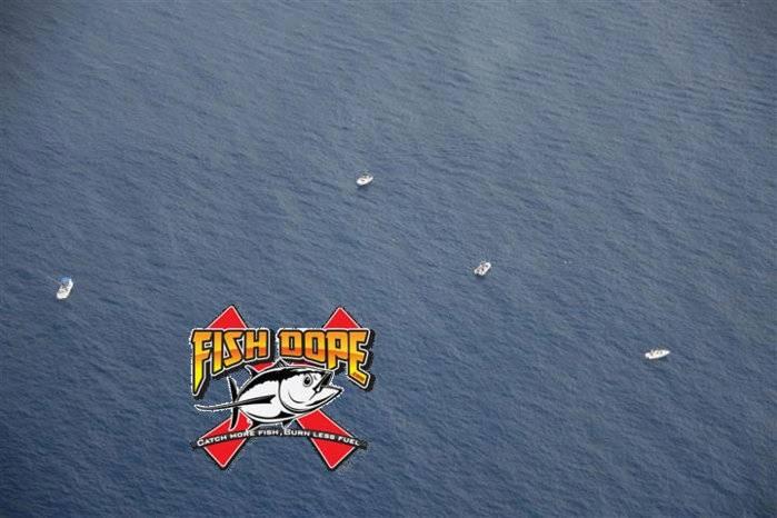 Fishdope Spotter Plane 9.jpg