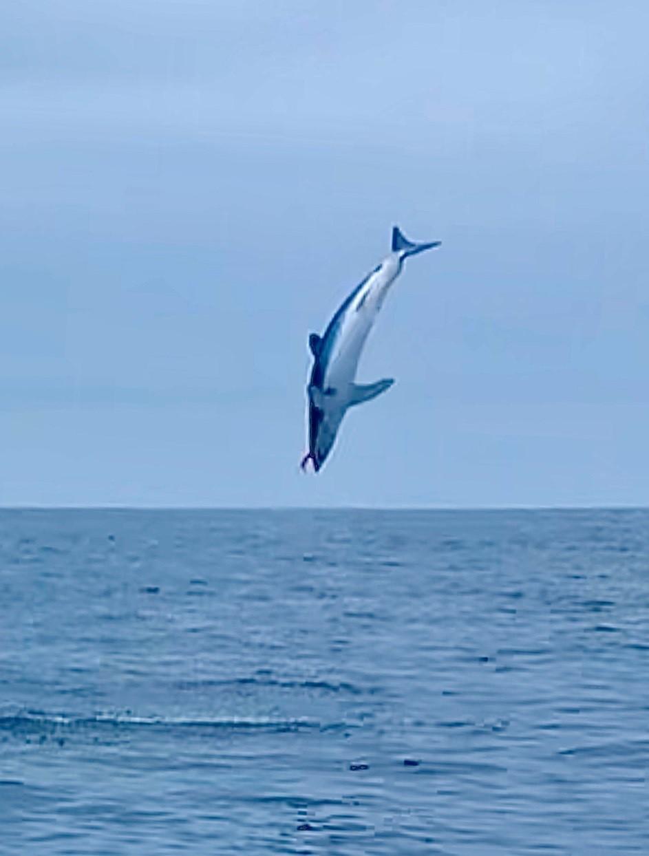 Flying Mako1.jpg