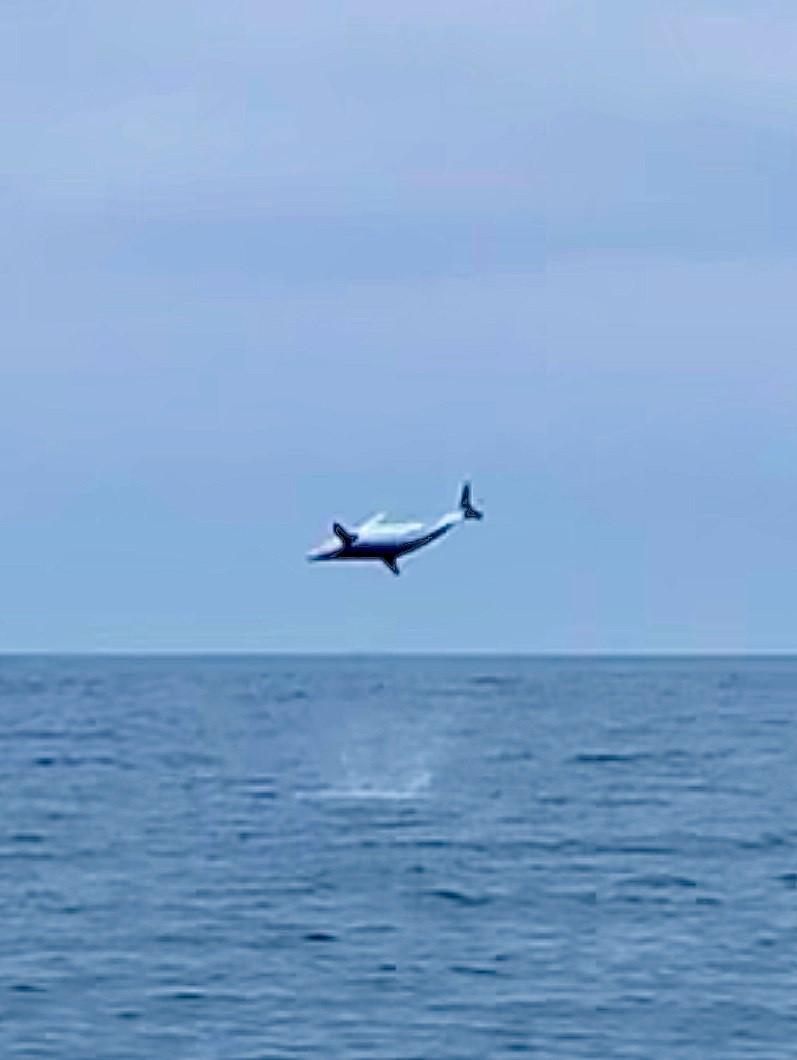 Flying Mako3.jpg