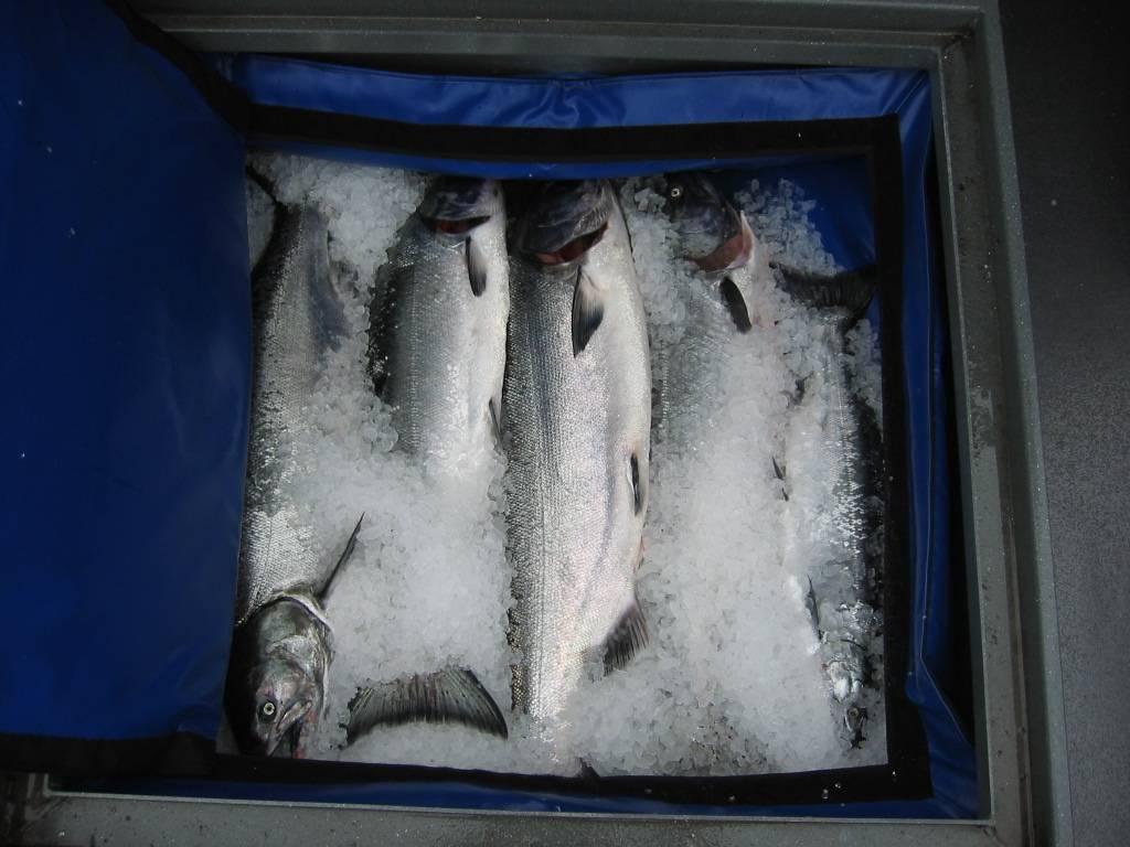 Silver Horde Katchkooler II Tasche D132