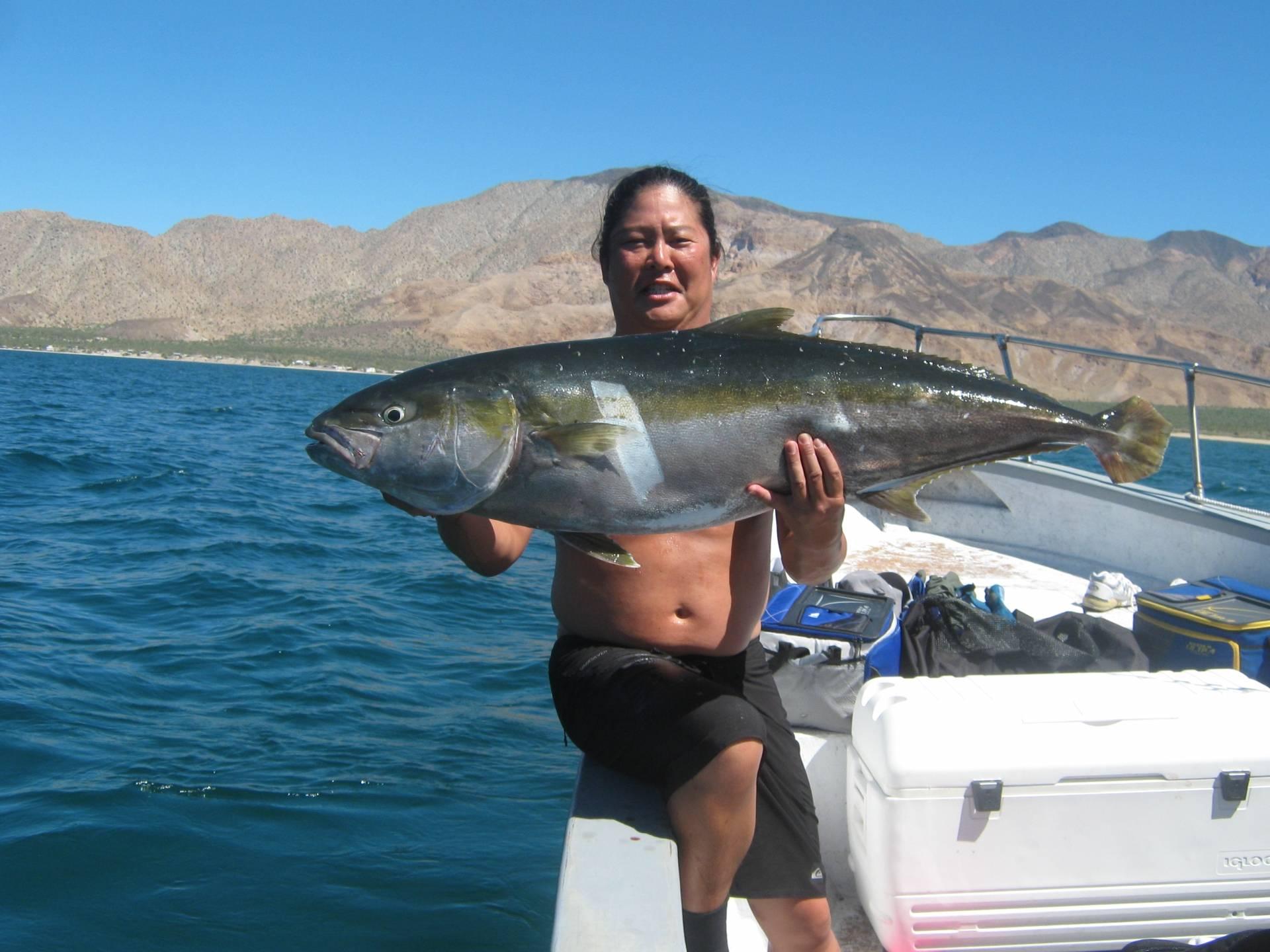 Bahia de los sportfishing for Fishing in los angeles