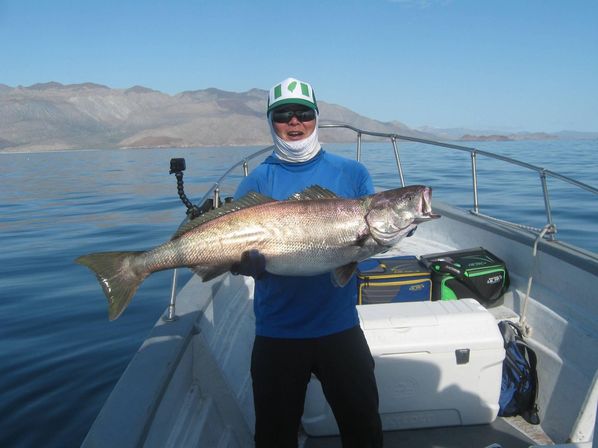 Bahia de los daggetts for Fishing report delaware