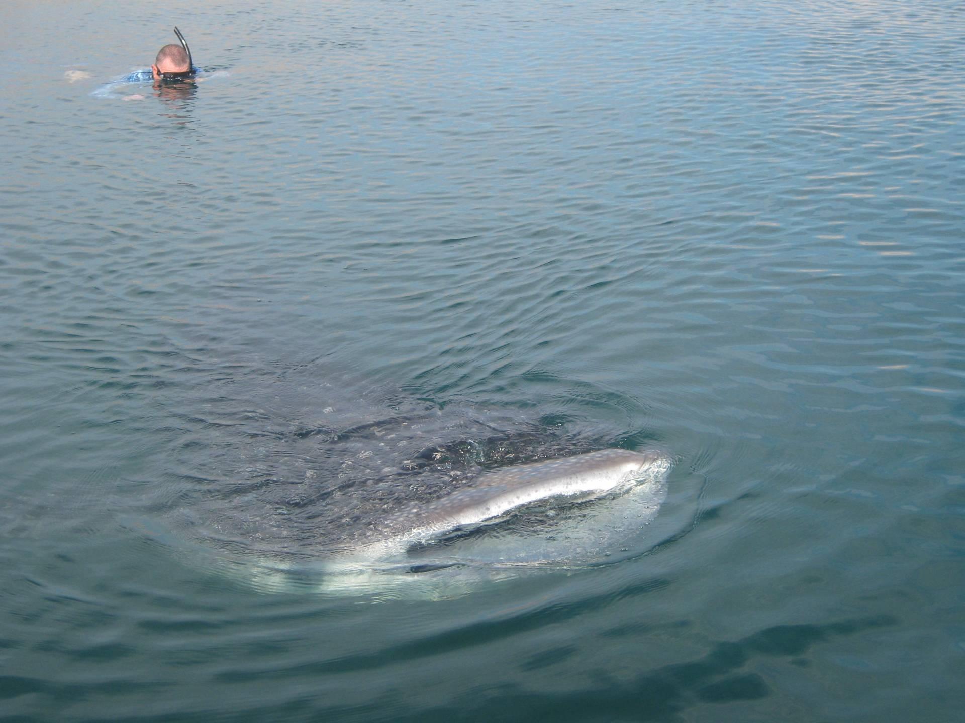 Bahia de los shark 7 sep sport for Fishing in los angeles