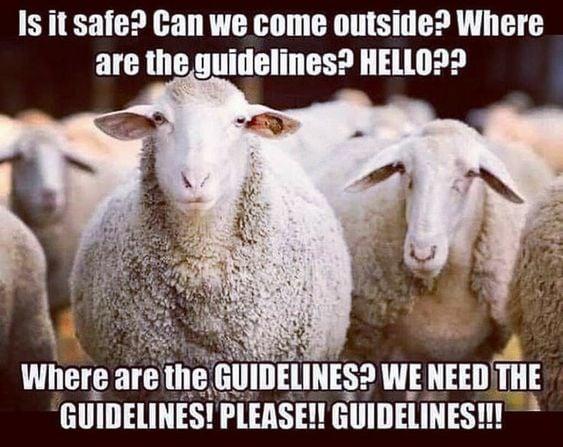is it safe sheep.jpg