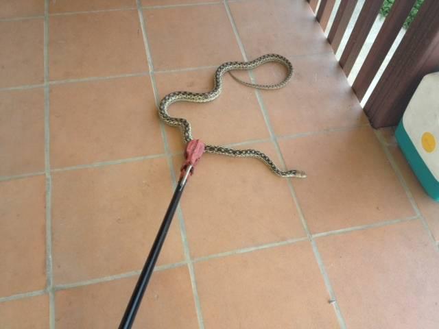 NP Snake.JPG