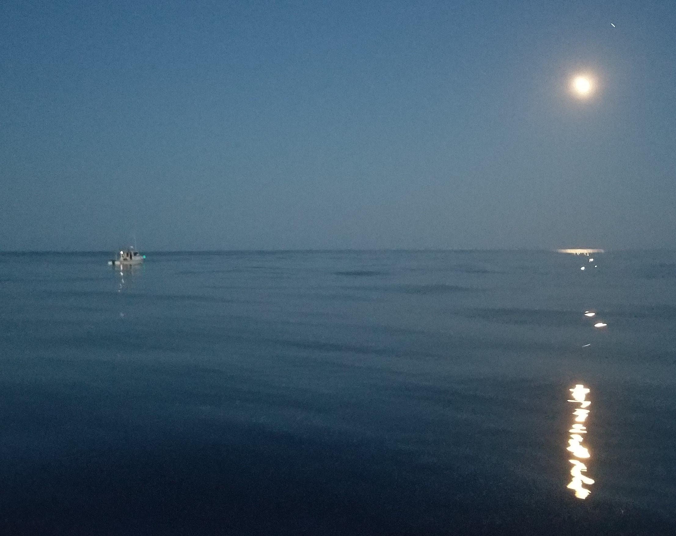 Shamrock in the Moonlight 200801.jpg