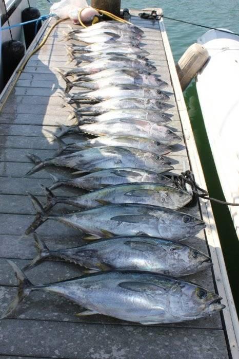 tuna jihad2.jpg