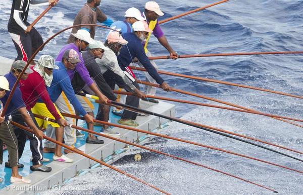 tuna-maldives.jpg