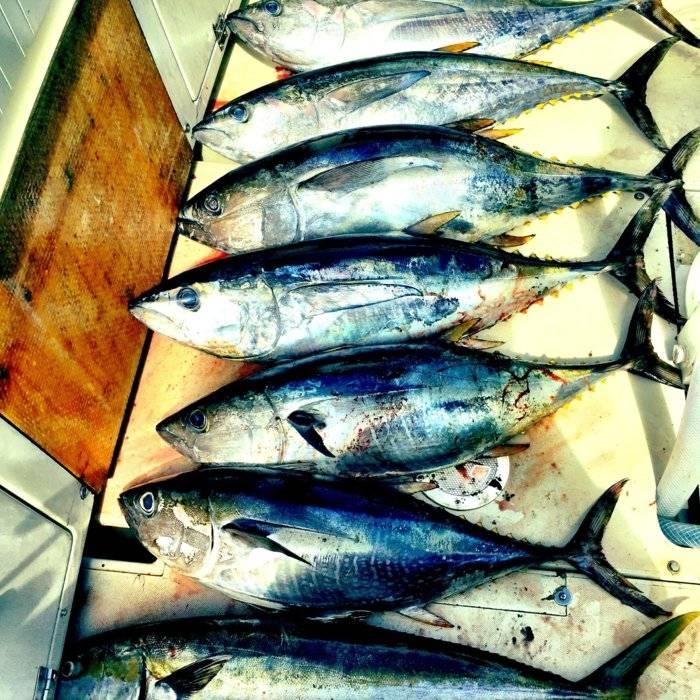 tuna_oceanside.JPG