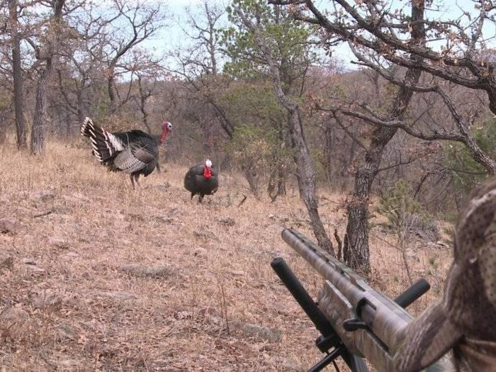 turkey in scope.jpg