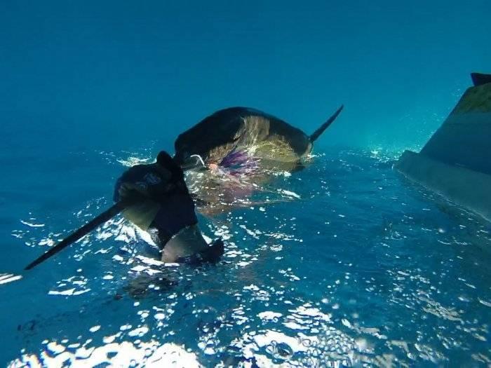 Underwater_grab.jpg