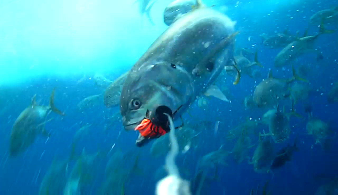 Great underwater fishing shots using a water wolf camera for Underwater camera fishing