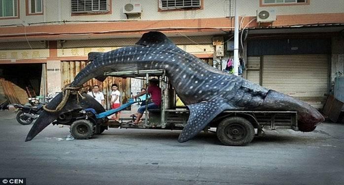 WhaleShark_1.jpg
