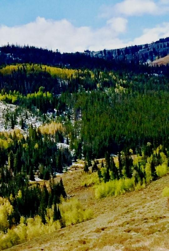 WYoming Elk country.jpg