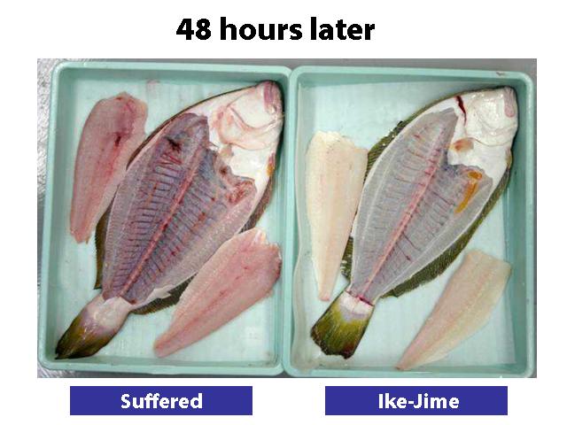 flounder02.png