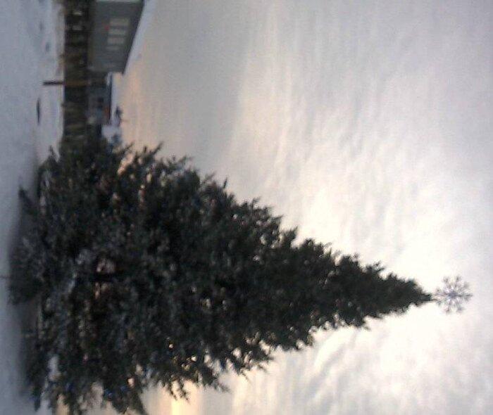 2107 OOB Christmas Tree.jpg