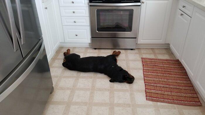 sleeping in the kitchen.jpg