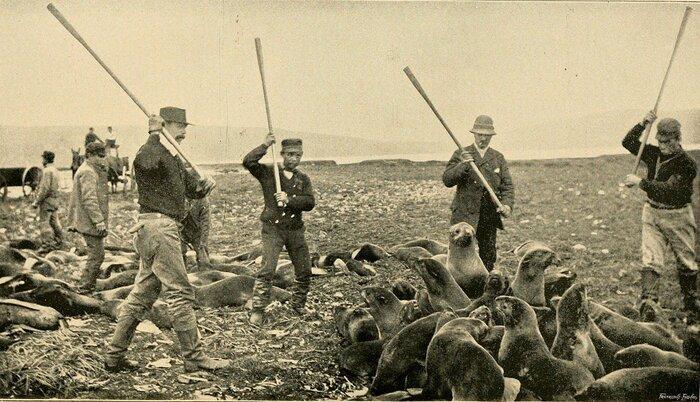 Killing_fur_seals,_St_Paul_Island.jpg