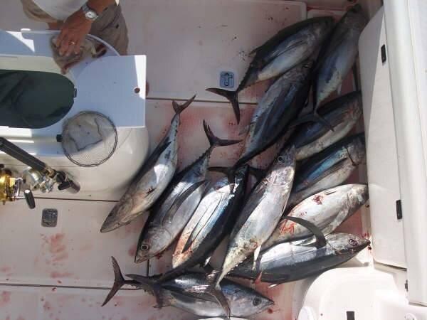 fishing007.jpg
