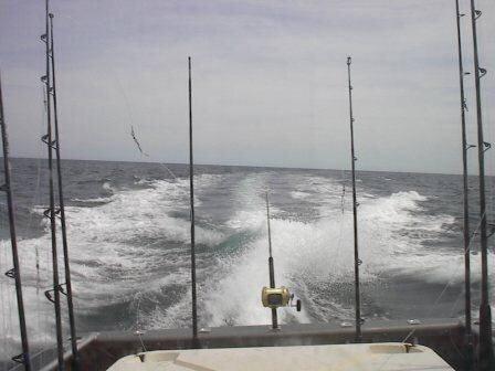 Copy of FISH 106.jpg