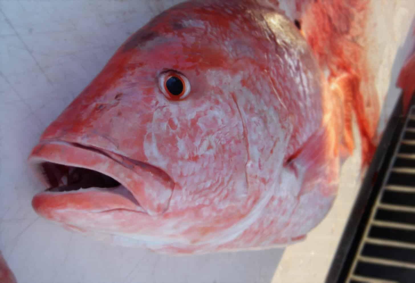 bottom fish - seafood fraud